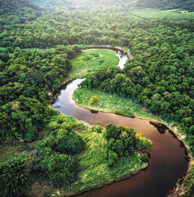 Et si... la forêt amazonienne disparaissait ?