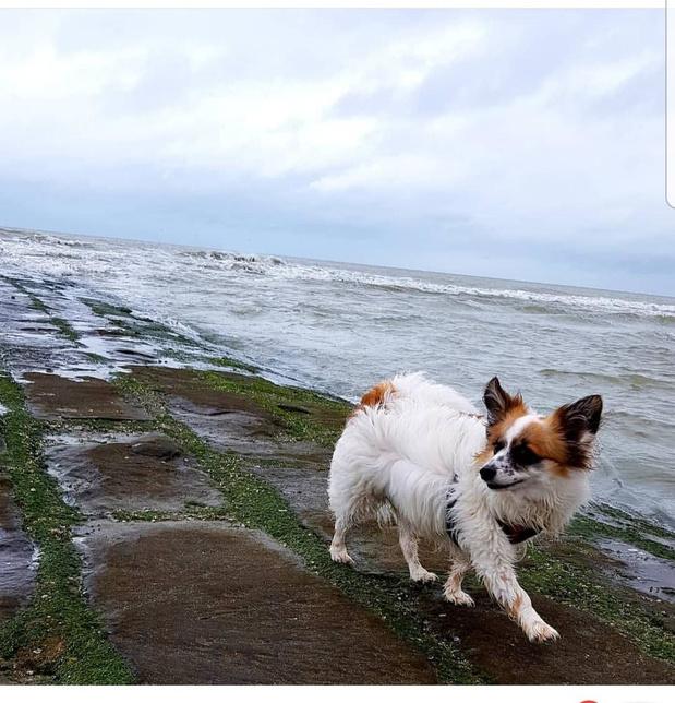 Wie heeft hondje Chanel gezien?