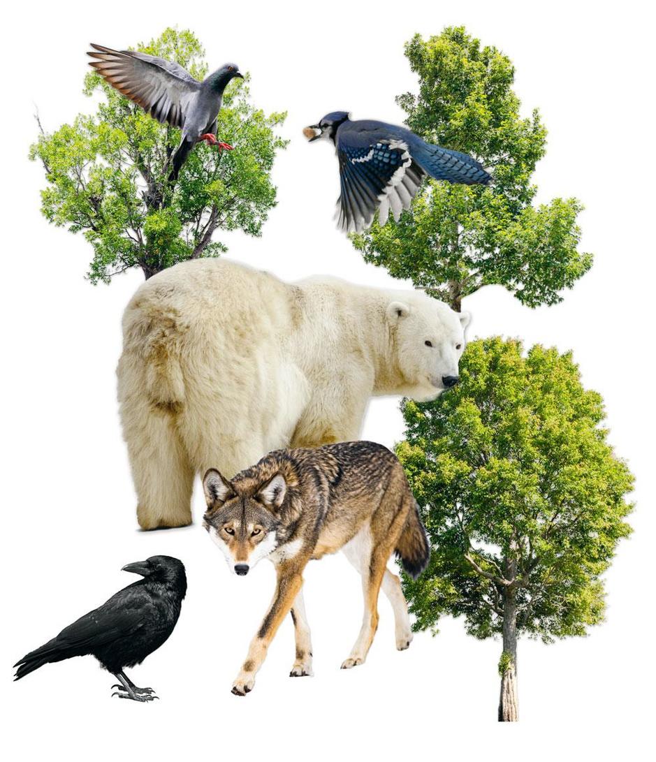 Moet de natuur rechten krijgen?