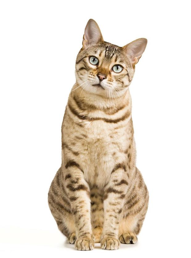 Een koosnaam voor je kat