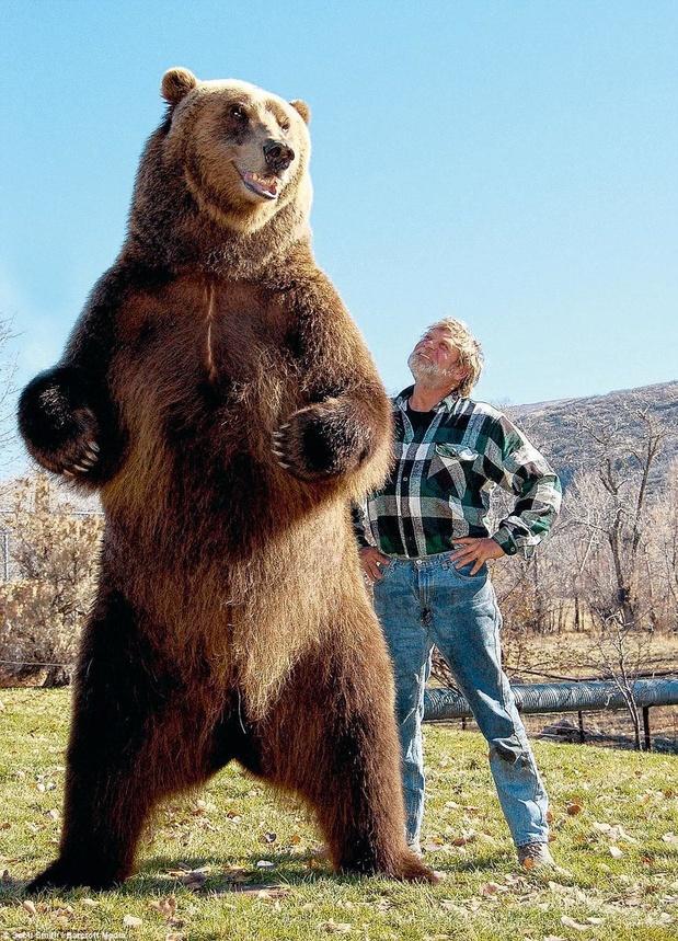 Bart the Bear 2
