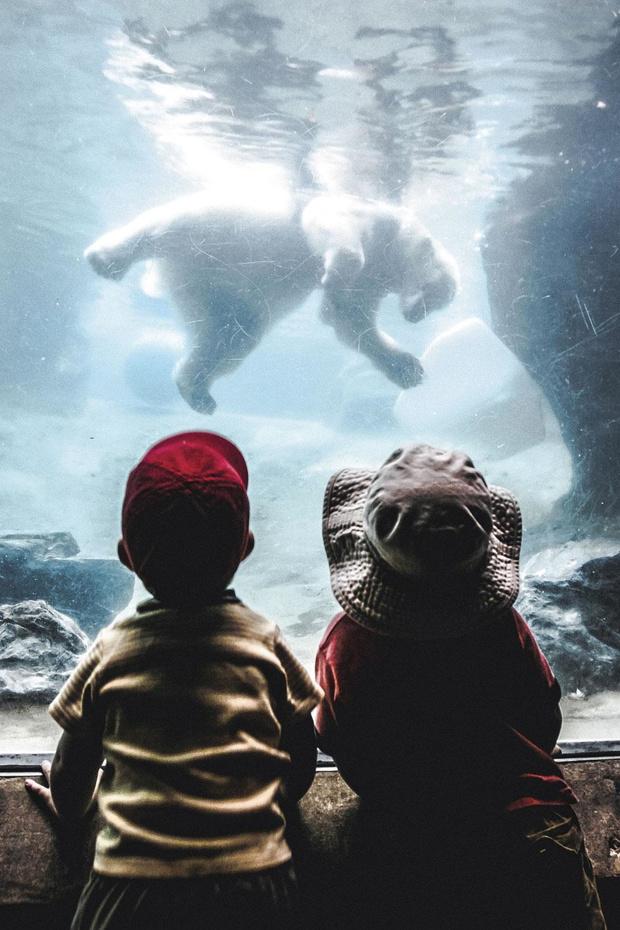 """""""Sauvegarde animale, soins, recherche: les zoos prouvent leur efficacité"""""""