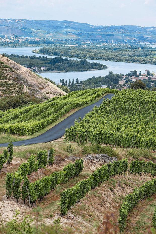L'Autoroute du Vin: wijngaarden die om een tussenstop vragen