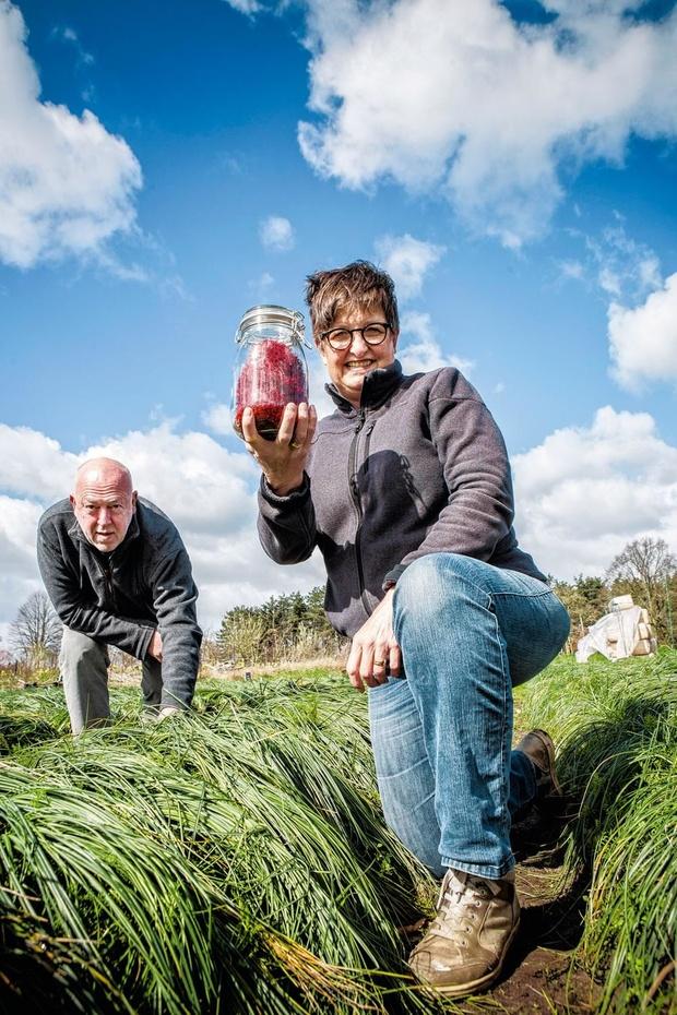 Linda en Marc runnen een saffraanboerderij