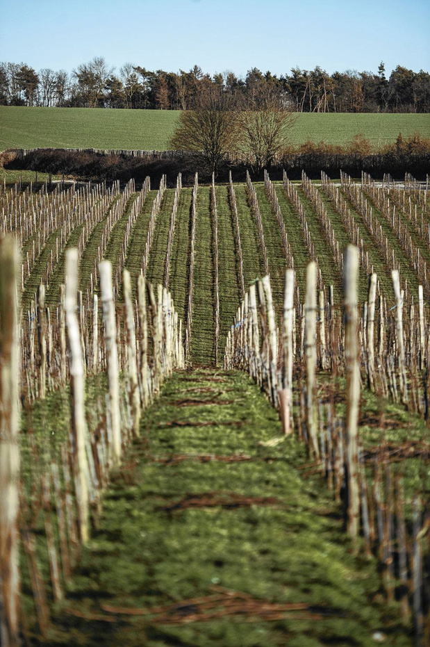 L'essor des vins belges