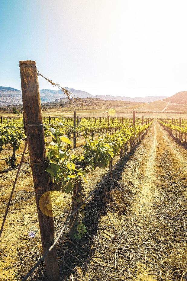 Nouveau climat, nouveaux vins ?