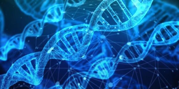 'Inteelt leidt tot verlies aan genetische variatie, wat een populatie kwetsbaarder maakt'