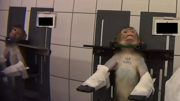 Expérimentation animale : pourquoi il faut montrer la réalité