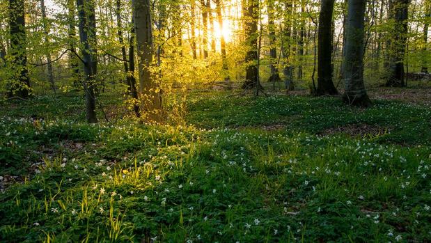 Krijgt West-Vlaanderen nu ook eindelijk meer bos én de mensen daarvoor?