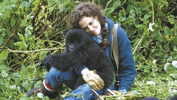 [À la télé ce soir] Gorilles dans la brume
