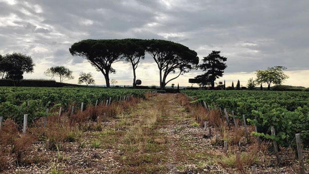 Bordeaux : la cité des vins