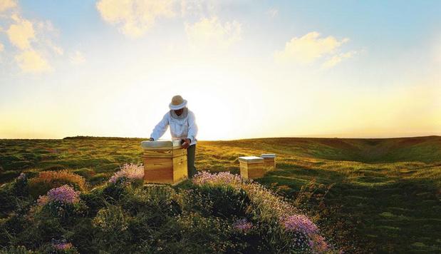 Beauty & the bee: waarom bijen belangrijk zijn voor de beauty-industrie