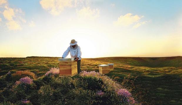 L'Unesco et Guerlain volent au secours des abeilles