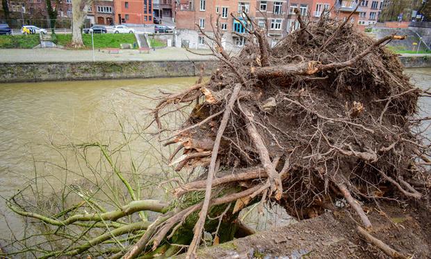 La tempête Ciara n'épargne pas la Belgique: les principaux dégâts