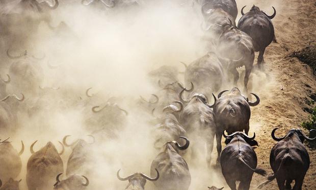 Au Zimbabwe, la sécheresse accroît les conflits entre l'Homme et la faune