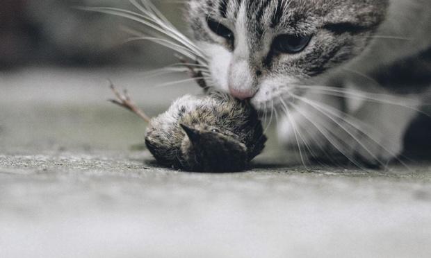 Il est interdit de laisser sortir votre chat
