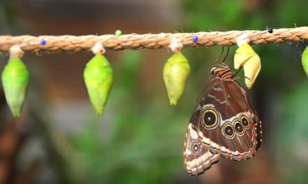 Wintertuin wordt weer Vlindertuin in Antwerpse Zoo