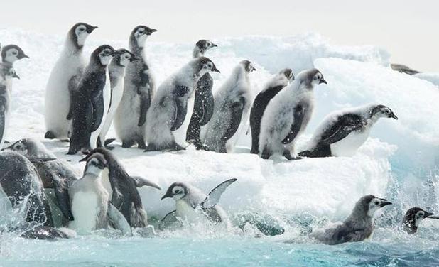 Expo 'Antarctica' focust op Belgisch wetenschappelijk werk op de Zuidpool