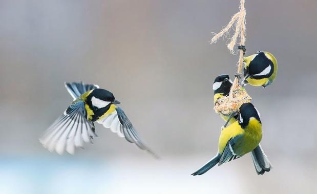 Les humains sont confinés, la nature reprend ses droits