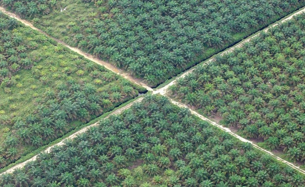 Palmolieprijs de hoogte in