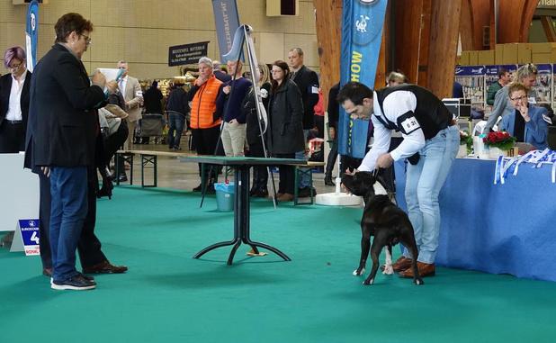 """Viervoeters van over de hele wereld op Eurodogshow: """"Aaien mag pas ná de keuring"""""""