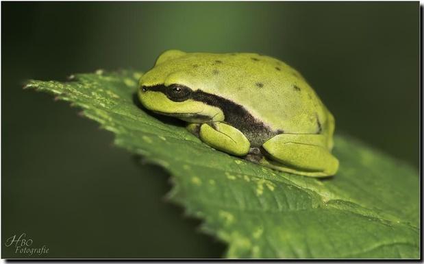 'Er mangelt heel wat aan het dossier van de Groene Delle: de natuur is niet maakbaar'