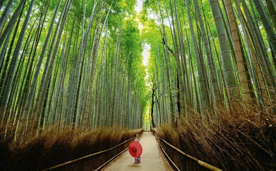 Helemaal zen in Kyoto: tuintoerisme is big business in Japan