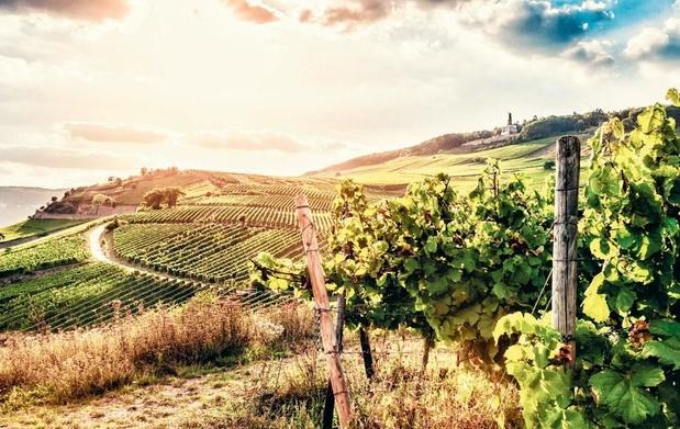 Le foncier viticole, un investissement pour le plaisir
