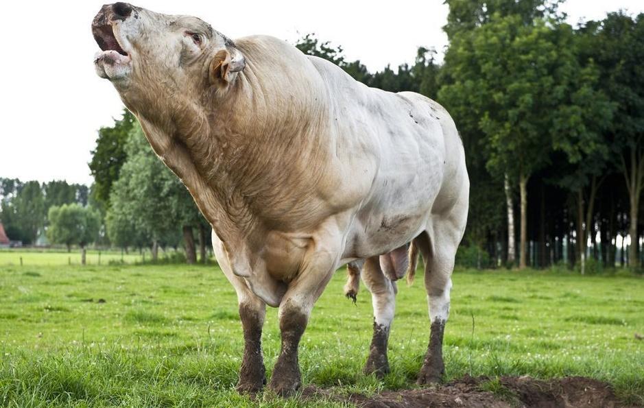 Factcheck: Vlees.be kort door de bocht over ecologische impact veganisme
