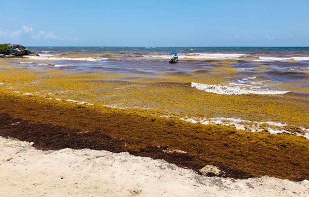 Décès de 5 surfeurs aux Pays-Bas: pas de système d'alerte pour l'écume de mer dans l'immédiat
