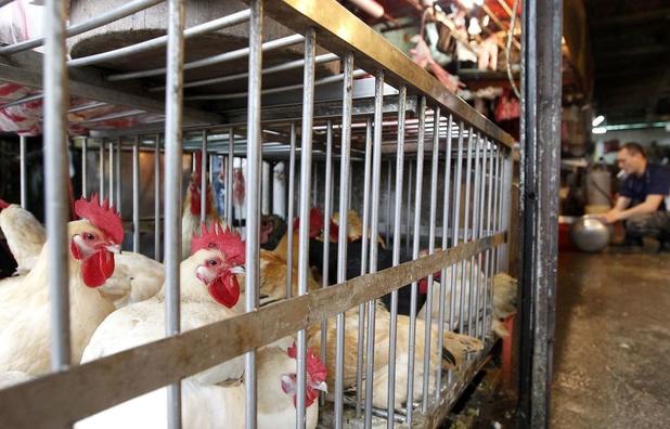 Grippe aviaire: la Chine suspend les importations de volaille française