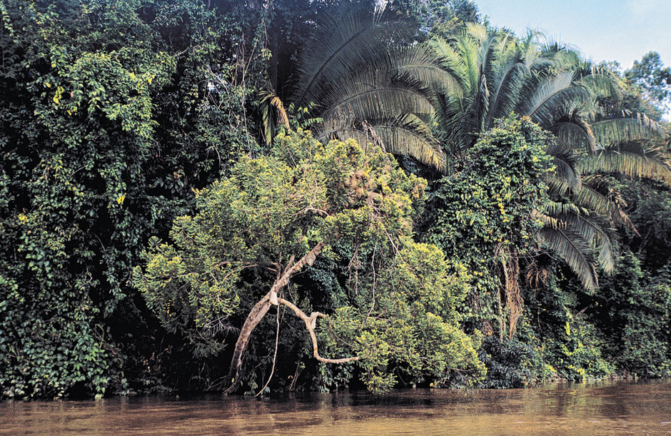 Hoe redden we het Amazonewoud? 'We hebben geen megalandbouw nodig om de wereld te voeden'