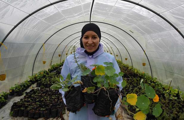 Tunisie: une pionnière se lance dans les fleurs comestibles
