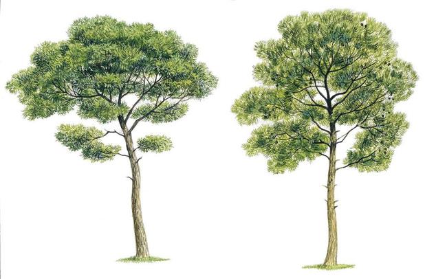 L'extrait d'écorce d'arbre réduirait-elle le TDAH ?