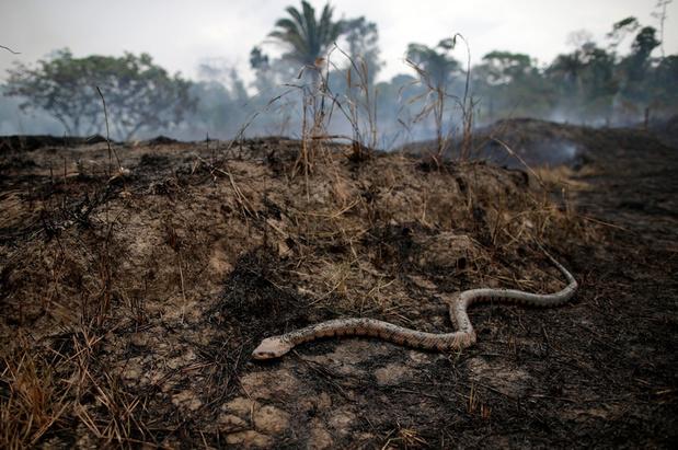 Had de slang die Eva verleidde poten?