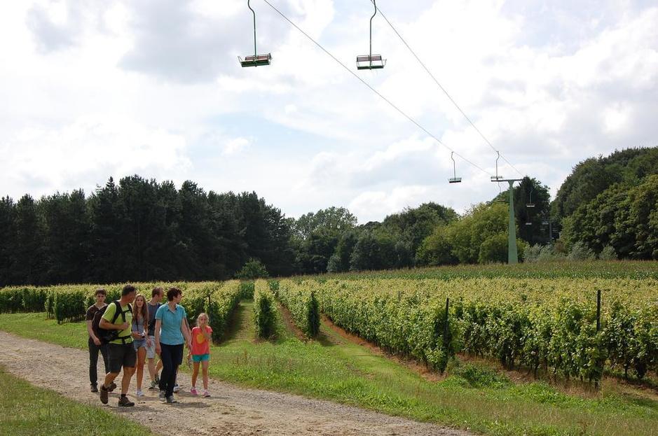 West-Vlaamse wijn wordt beter met de jaren: jaarlijks al 200.000 flessen op de markt