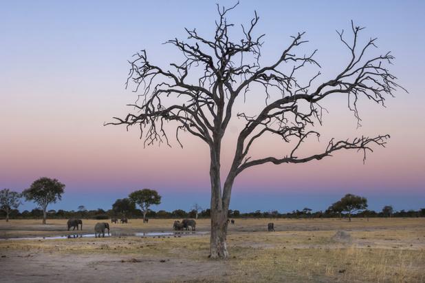 Tientallen olifanten sterven door droogte in Zimbabwe
