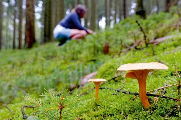 Préserver la biodiversité et consommer local : comment vivre la saison des champignons à Bruxelles