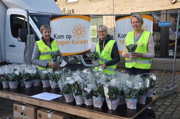 Vierhonderd azalea's verkocht voor Kom Op Tegen Kanker in Lo-Reninge