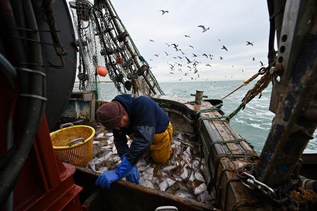 Brexit: Brugse vissers hopen op privilege uit 1666