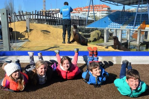 Zeeleeuwen Sea Life terug thuis in Blankenberge
