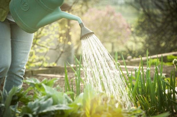 Fris uw tuin op na de hittegolf en de regens