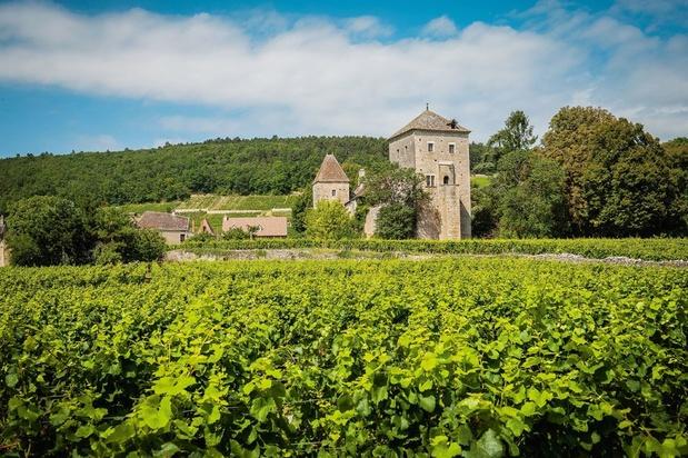 """Bourgogne: un millésime 2020 """"remarquable"""""""