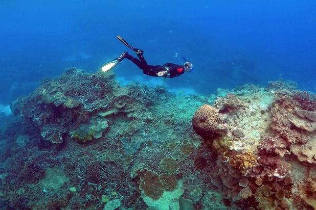 """""""Très mauvaises"""" perspectives pour la Grande Barrière de corail, selon des scientifiques"""