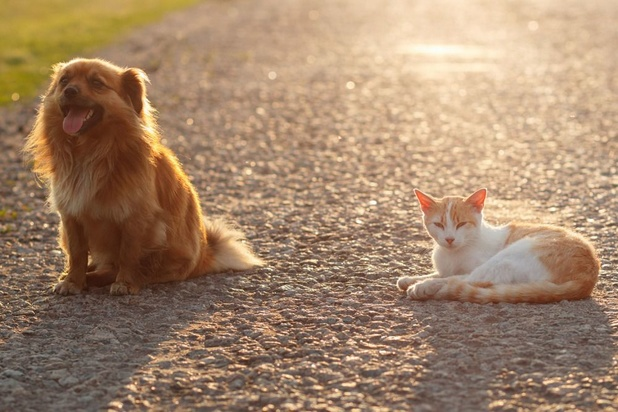 Canicule : quelques conseils pour protéger vos animaux de la chaleur