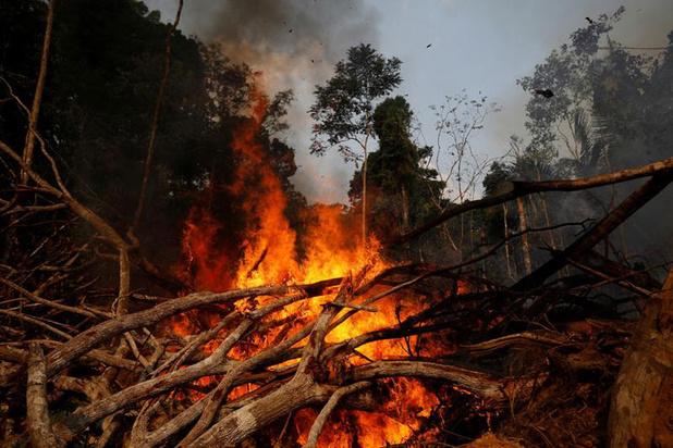 Fairfin: 'Belgische banken investeerden in bedrijven die mee verantwoordelijk zijn voor branden in Amazonegebied'