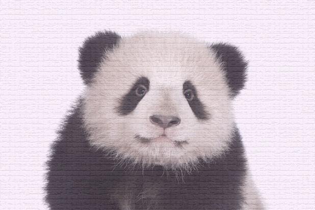 """""""Dégueus"""" ou """"trop mignons!"""": l'image des animaux nous influence"""