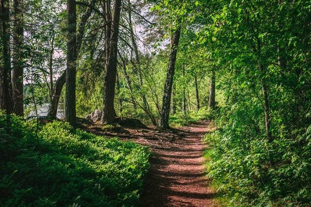 'Red je het klimaat door bomen te kappen? Enkele tips voor het Vlaamse bosbeleid'