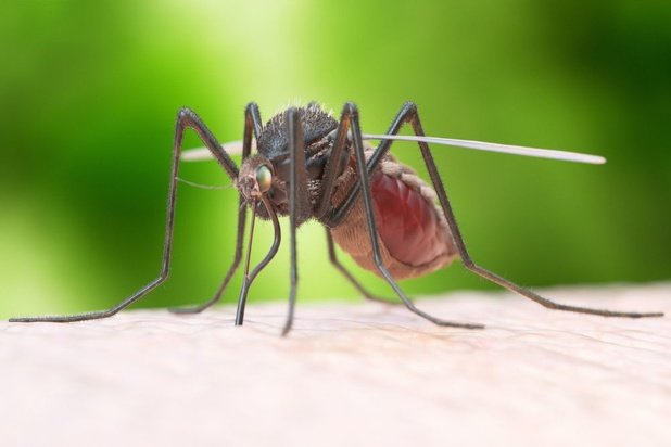 Dengue-alarm in Thailand