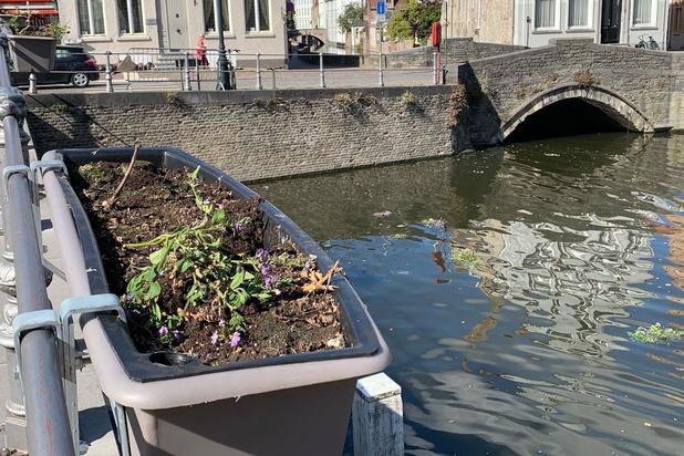 Vandalen vernielen bloemen aan de Carmersbrug